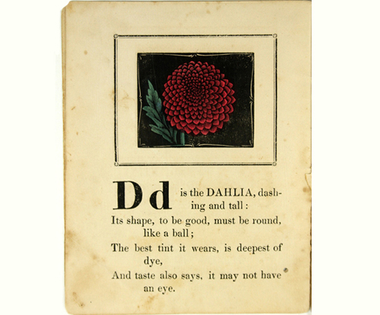 honey-kennedy-dahlia-page-botanical-alphabet-book-dean-and-son-england-1847-1855