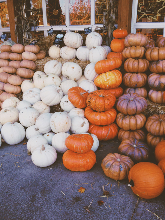 honey-kennedy-jen-mccabe-pumpkins-fall-2013