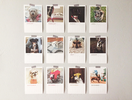 honey-kennedy-bloggers-love-cats-and-dogs-calendars-fundraiser-03