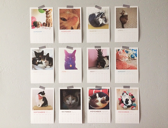 honey-kennedy-bloggers-love-cats-and-dogs-calendars-fundraiser-06