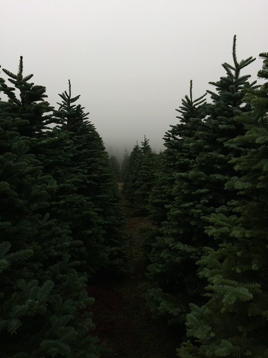 honey-kennedy-christmas-trees-02