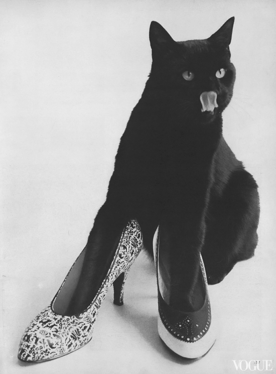honey-kennedy-black-cat-in-shoes-leombruno-bodi-vogue-december-1955