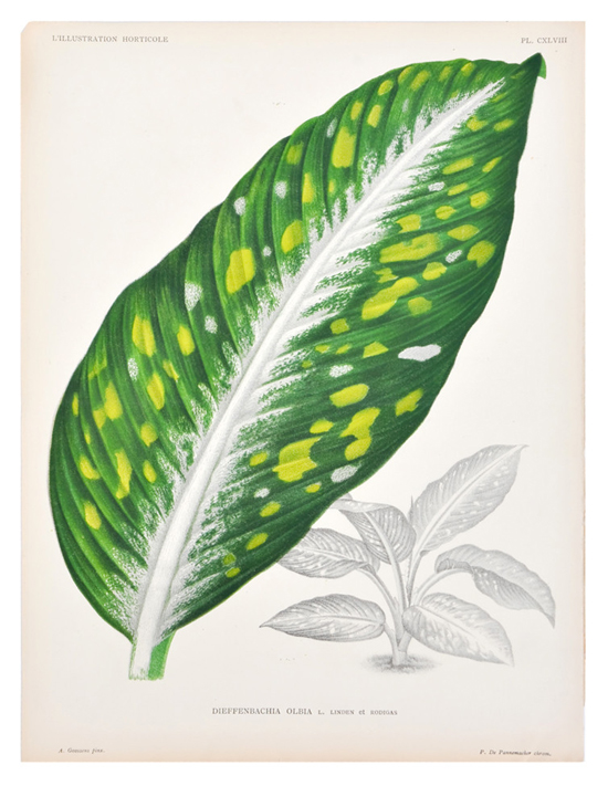 honey-kennedy-leif-dieffenbachia-olbia-leaf-print