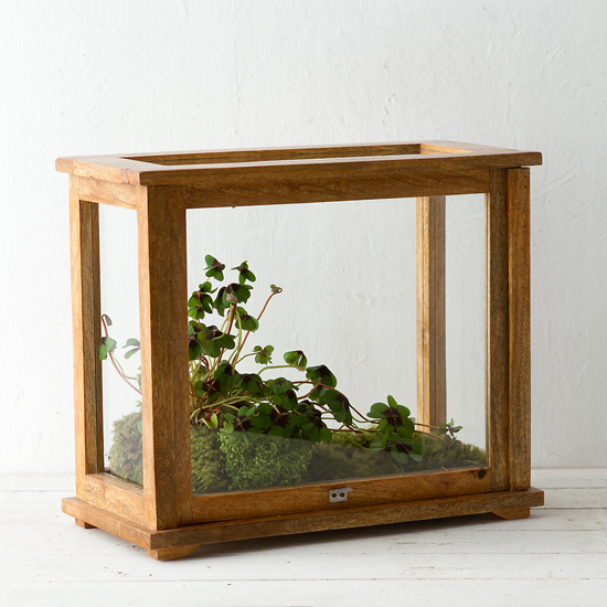 honey-kennedy-lovely-things-2-01-specimen-terrarium