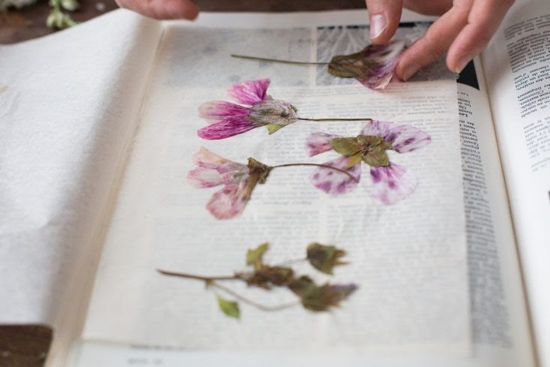 honey-kennedy-lovely-things-09-03-gardenista-pressed-flowers-diy